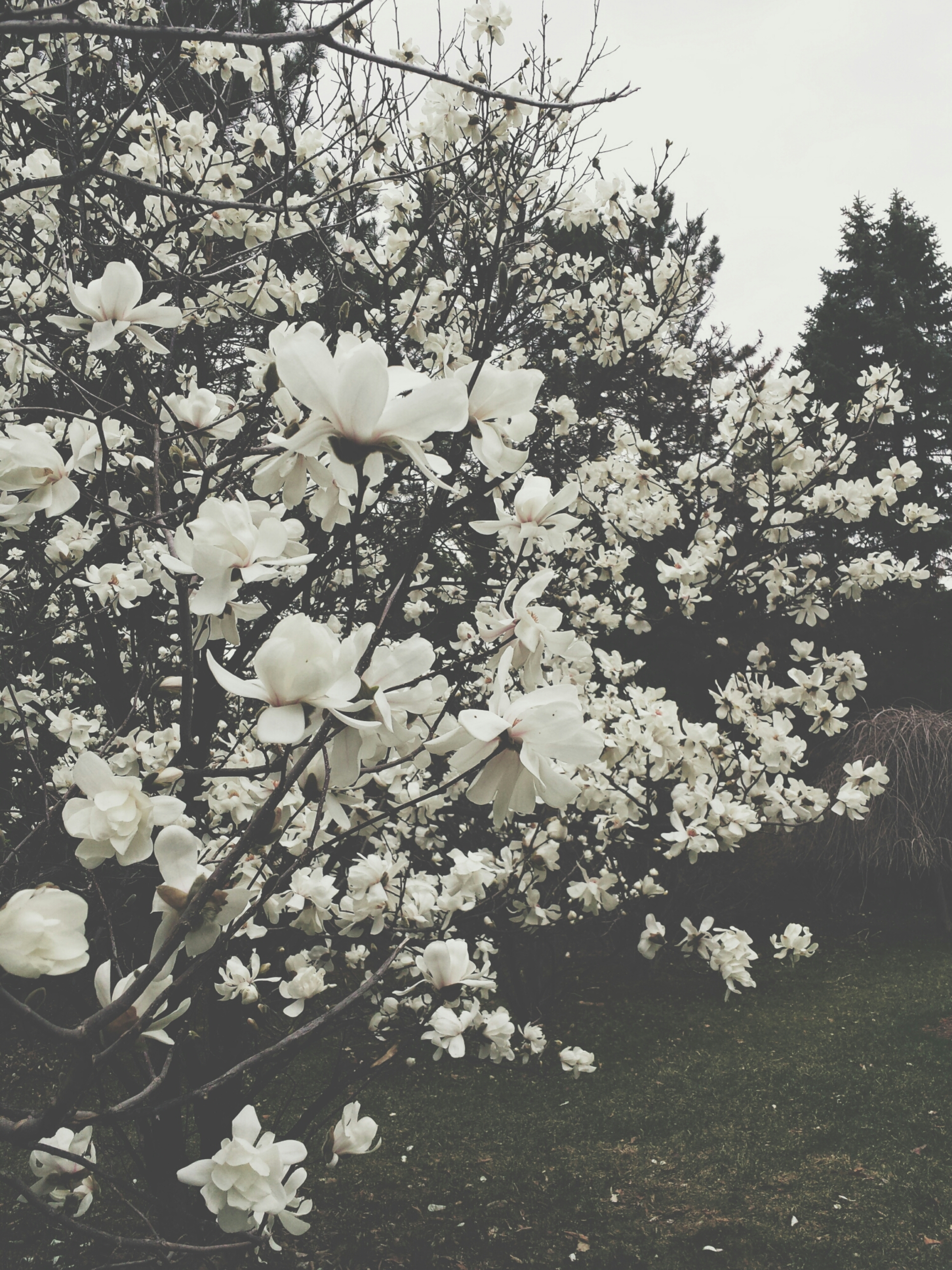 spring photo series